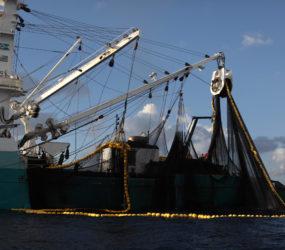 Mobilisation – Non à la réintroduction de subventions néfastes dans la pêche