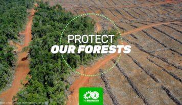 Déforestation et autres dommages environnementaux : les entreprises doivent pouvoir être tenues responsables