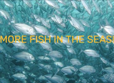 Nous avons besoin de plus de poissons dans les mers!