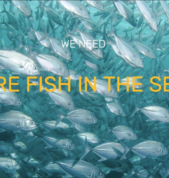 Nous avons besoin de plus de poissons dans les mers !