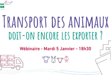 Webinaire – «Transport des animaux : doit-on encore les exporter ?»