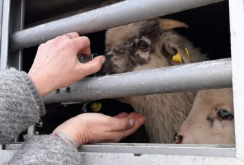 Transport d'animaux vers l'Italie: retour sur notre mission (Vidéo)