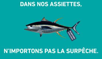 Journée mondiale du thon: l'albacore en danger dans l'Océan Indien
